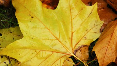 Autumn leaves have sparked safety concerns.