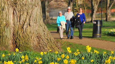 Daffodils and sun on Riverside Walk, which is set to benefit from funding this financial year and ne