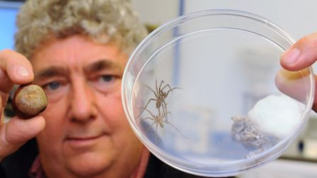 Dr Ian Bedford, head of entomology at the John Innes Centre, working with house spiders and conkers