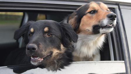 Bruno, left, 11-months-old, and Benji, two, in the car waiting to be collected by the nurses at Tave