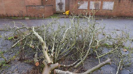 Walnut trees that have been chopped down. Picture: SARAH LUCY BROWN