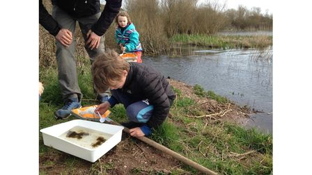 Pond dipping is one of the topics featured in the Field Studies Council's online lessons