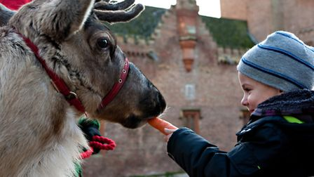 A child feeding a reindeer from Melsop Farm Park at Oxburgh Hall. Picture: MARK BUNNING PHOTOGRAPHY