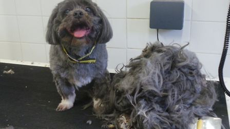 Bobby, a Lhasa Apso, was trimmed of half a kilo of hair at Dogs Trust Snetterton.
