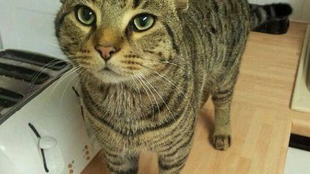 Two-year-old Eddie who has been missing from his new home in Mutford for over two weeks.