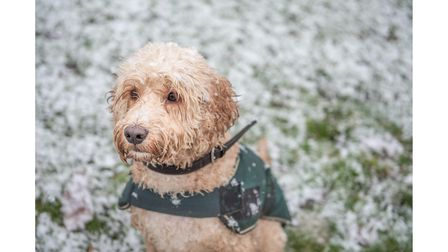 More snow could be covering Suffolk bythe end of the week