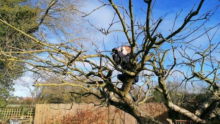 Pupil birdwatching from up a tree in their garden.