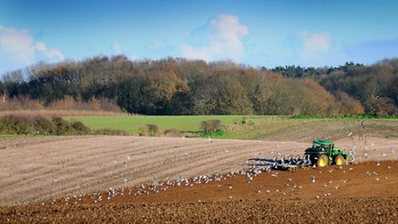 A farmer ploughing his field at Bayfield.Picture: ANTONY KELLY