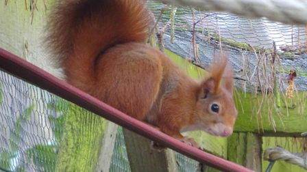Kelling Health Holiday Park, near Weybourne, has welcomed two new red squirrels as part of a conservation programme.
