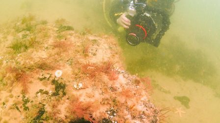 Diver Dawn Watson by one of the 10,000 year old trees found off the coast of Norfolk. Picture: Rob S