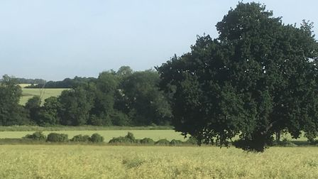 Countryside off Searson's Lane, Trimley St Mary