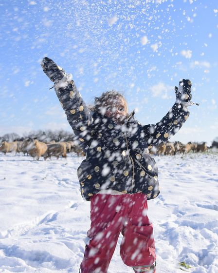 Shepherdess Becky Dixon's daugher Evie enjoying playing with the snow whilst out helping her mum on