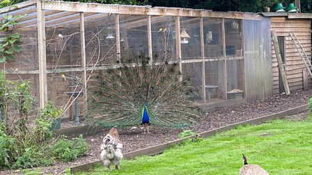 More than 100 birds were stolen from an aviary at a homein Seething.