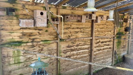 More than 100 birds were stolen from an aviary at a home in Seething.