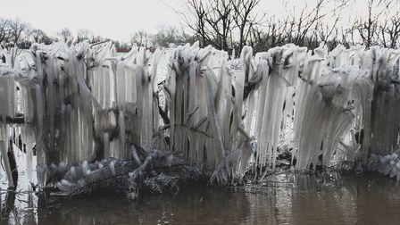 ice hanging from trees