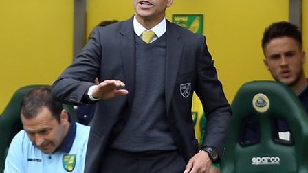 Former Norwich City boss Chris Hughton has been named as the new manager at Brighton and Hove Albion