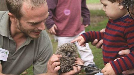 Meet the resident hedgehog at Pensthorpe's Bee a Nature Explorer event this half term