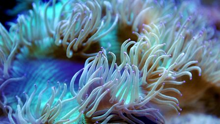 Glen Gardiner who imports coral from sustainable reefs in Australia.Picture: James Bass