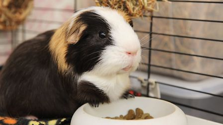 Lisa Herbert with her daughter Alice have set up guinea piggles hotel for small animals at their hom