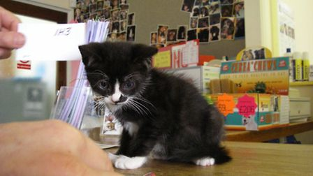 One of the kittens that was neglected by an owner in Thetford.