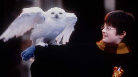 Actor Daniel Radcliffe in his role as Harry Potter holds Hedwig, the owl, on his arm during the shoo