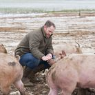 Alastair Butler of Blythburgh Pork with some of his pigs in the freezing conditions. Picture: SARAH