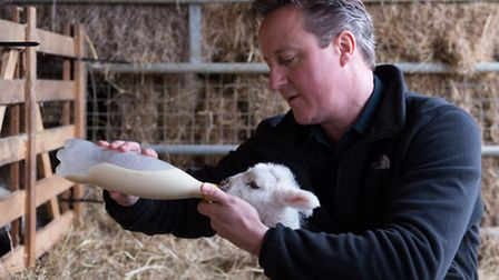 Prime minister David Cameron feeds a newborn lamb at an Oxfordshire farm during the General Election