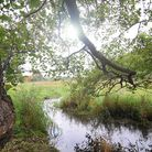 The natural beauty of the River Glaven. PHOTO: ANTONY KELLY