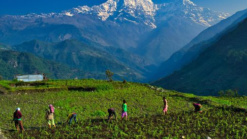 Picture of people working in an agricultural field in Nepal