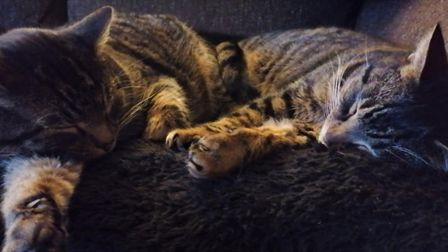 Dave with his brother Chas. Dave was reunited with his owner after he went missing 16 months ago.
