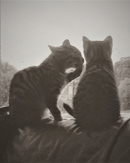 Dave and Chas when they were kittens.