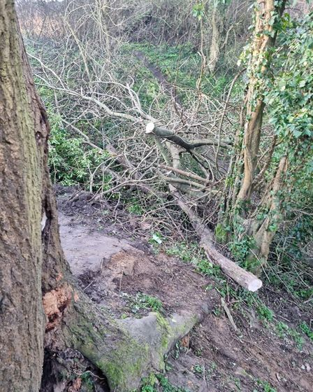 Trees are being cut down by BMX users