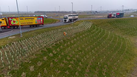 """A """"large proportion"""" of the nearly one million trees planted as part of the A14 upgrade in Cambridge"""