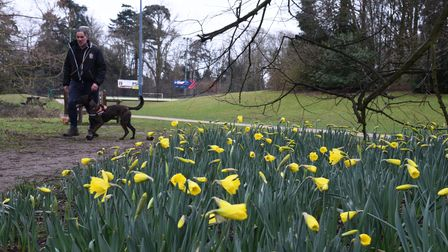 Nowton park in Bury St Edmunds saw a flurry of people through the weekend as the daffodils start to