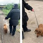 In June 2020, Cambridgeshire Constabulary reunited two stolen dogs with their owners following a warrant in Willingham.