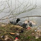Rubbish dumped in the River Nene at Stanground.