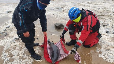 A porpoise was rescued from the beach at East Runton.