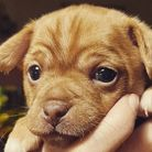A nine-week-old puppy was stolen from its home in Doddington