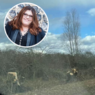 """Independent, borough and county councillor Sandra Squire was left """"shocked"""" after spotting 'hundreds' of trees had been..."""