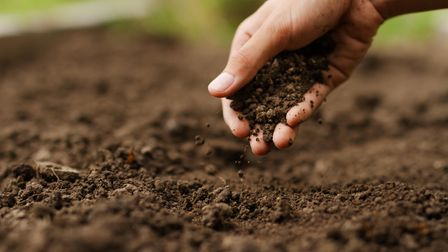 Expert hand of farmer checking soil health before growth a seed of vegetable or plant seedling. Gard
