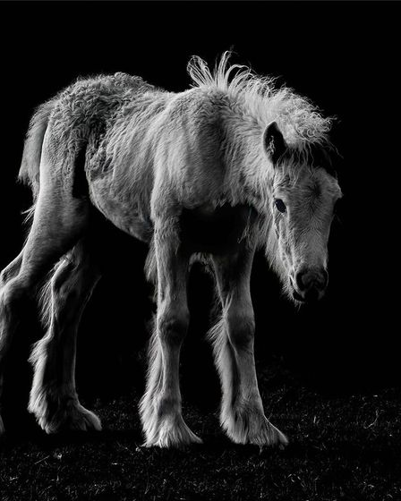 Congratulations to Ryan Bailey who came first in our monochrome competition with his image; The Sad Foal