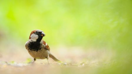 March 20 is World Sparrow Day