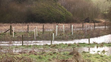 The two-year project by the Environment Agency and Suffolk Wildlife Trust to plant trees along the Rivers Gipping and Rat