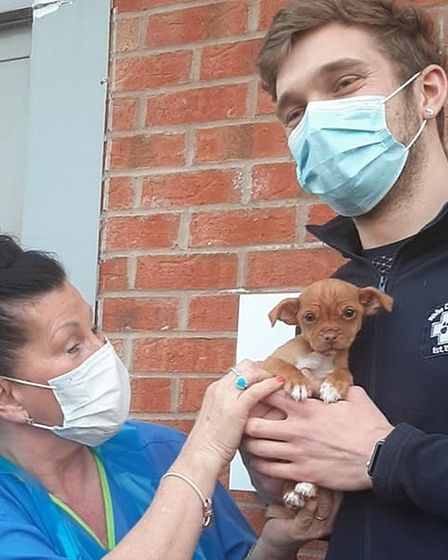 Birmingham vets look after dog Miracle