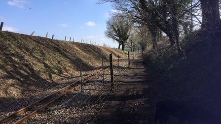 The Broadland Tree Warden Networkhas raised concerns about trees being felled along the Bure Valley Railway.