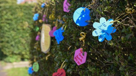 The memorial hedge in Hadleigh created by Jo Sheldrake who lost her dad to COVID-19. Picture: Daniel