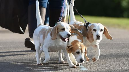 Police have moved to reassureowners over social media rumours about dog thefts.
