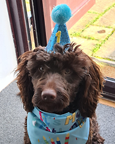 Guss the cockapoo who visits The Harbour School in Wilburton twice a week.