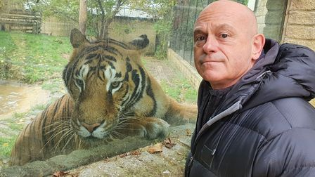From Honey Bee Media BRITAINS TIGER KINGS: ON THE TRAIL WITH ROSS KEMPTuesday 30th March 2021 on