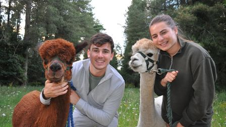 Visitors enjoying their experience with Let's Go Alpacas in Thetford Forest